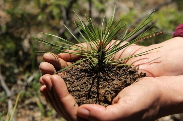 В Лысогорском районе в 2020 году высажено более 145 гектар леса